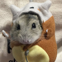 Hamster Gets Cozy in Pokémon Cosplay