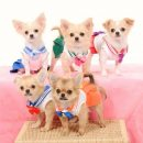 Sailor Scout Cosplay Gone to the Dogs